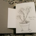 Angel Wing Begonia plant sketch